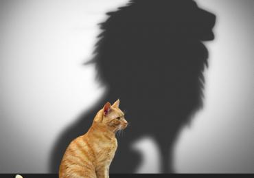 Habits of Self Confidence